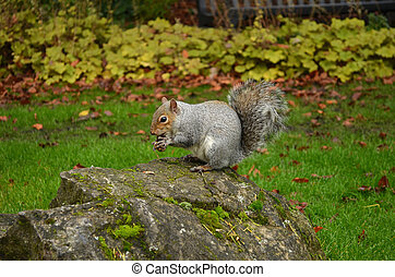 Squirrel eating a nut in Park