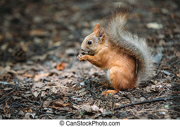 squirrel eating a nut