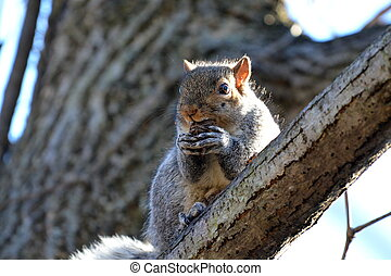 Squirrel eating a nut1
