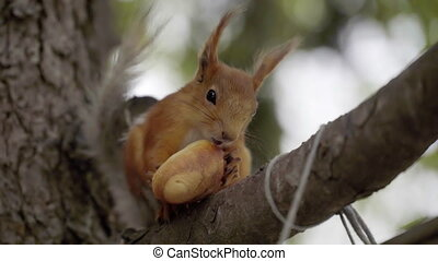 squirrel eating bread on a branch. - squirrel eating bread...