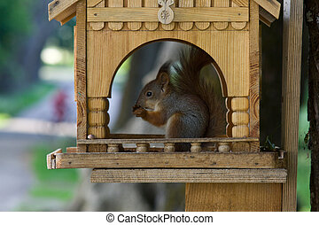 Squirrel eating in the feeder house