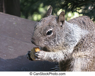 Squirrel eating in Yosemite Valley