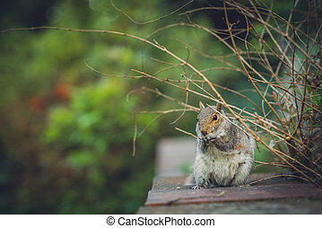 Squirrel eating nut in a park
