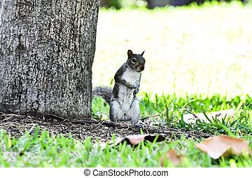 squirrel eating nut, squirrel background