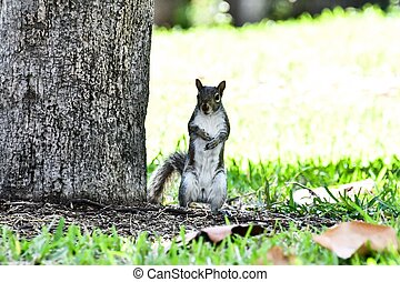 squirrel eating nut, squirrel background , digital image picture