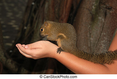 Feeding of the squirrel from a hand. selective focus