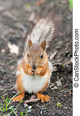 squirrel eats seeds
