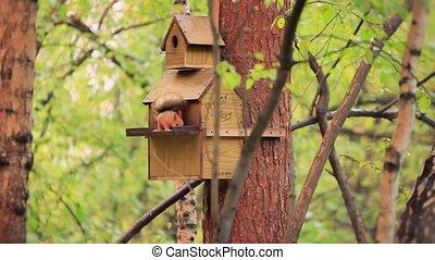 Squirrel eats Wooden bird feeder on pole stands in autumn forest park. 1920x1080