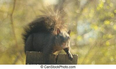 Squirrel faces the camera.
