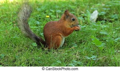 Squirrel finish eating