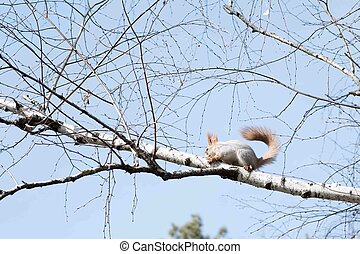 Squirrel hanging on a tree close up
