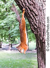 squirrel hanging on a tree