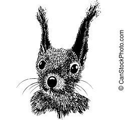 Squirrel head vector animal illustration for t-shirt. Sketch...