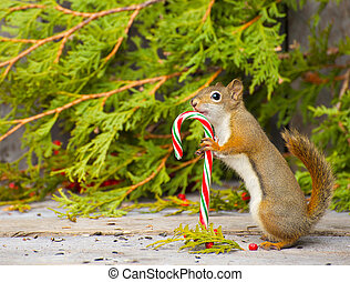 Squirrel holding candy cane. - Abstract image of a little ...
