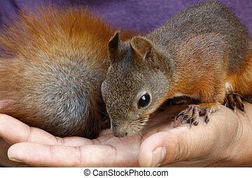 squirrel in a hand