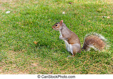 Squirrel in a park