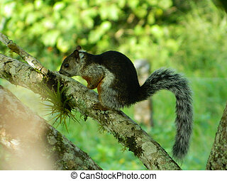 Squirrel in a Tree - This is a photo of a squirrel eating in...