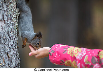 Squirrel in the Park eating out of your hand in a child.