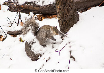 Squirrel in the Winter