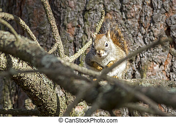 Squirrel in tree.