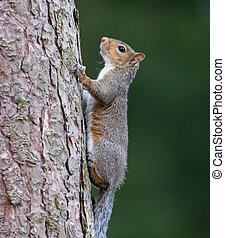 Squirrel in tree