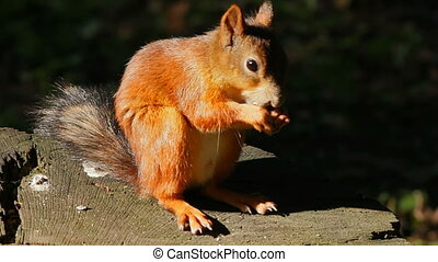 Squirrel itching