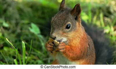 Squirrel lunching