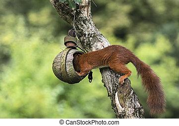 Squirrel on a bird feeder