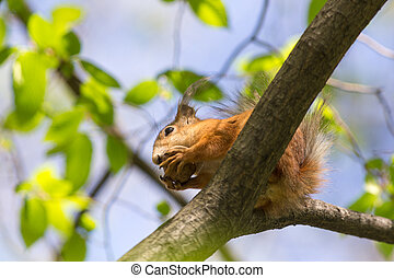 squirrel on a spring tree