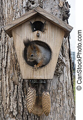 squirrel on a tree in a house