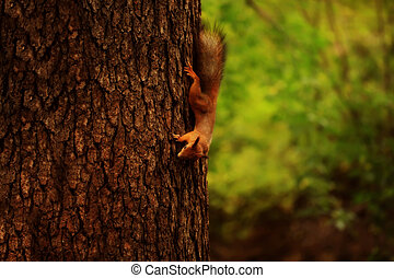 squirrel on a tree in the autumn forest