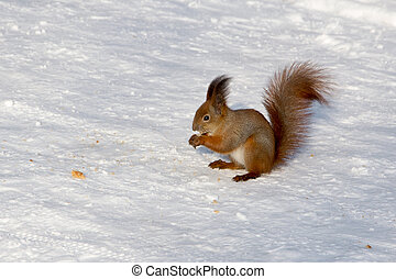 Squirrel on a tree in winter