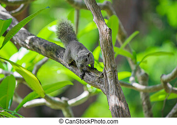 Squirrel on a tree.
