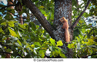 Squirrel on a tree trunk in the forest