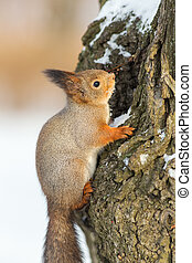squirrel on a tree