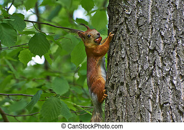 Squirrel on a tree trunk.