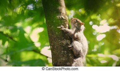 Squirrel On Branch Shallow Focus - Squirrel moves around...