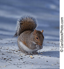 Squirrel on ice