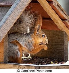 Squirrel on the bird feeder