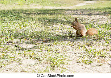 Squirrel on the grass. closeup