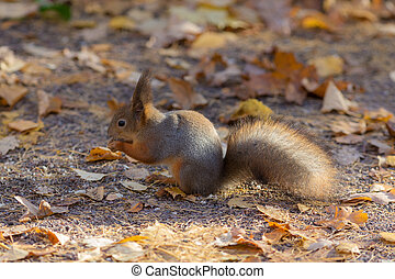squirrel on the ground