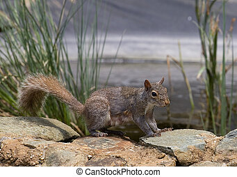 squirrel on the rocks