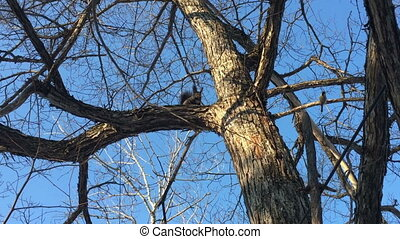squirrel on the tree day summer