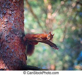 squirrel on the tree