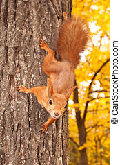 Squirrel on the tree trunk