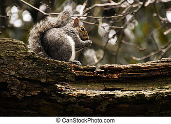 squirrel on tree branch eating