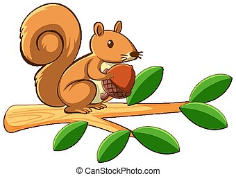 Squirrel on white background