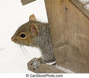 Squirrel Peaking Around Corner