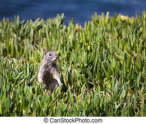 Squirrel Portrait in the Grass
