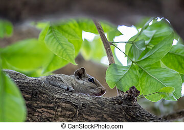 Squirrel sitting in a tree branch